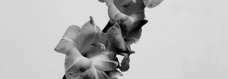 sw_flowers-3183245_1920
